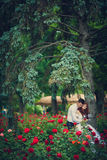 Portrait newlyweds among the blooming roses. Bride and groom hugging among the bushes of red roses. Consider the rose petals on the hectic palms. Wickedness on stock photos