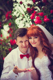 Portrait newlyweds among the blooming roses. Bride and groom hugging among the bushes of red roses. Consider the rose petals on the hectic palms. Wickedness on stock photography