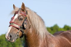 Portrait of nice big horse with bridle Stock Photos