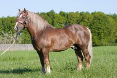 Portrait of nice big horse with bridle Stock Image