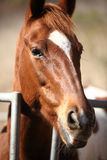 Portrait of nice brown horse Royalty Free Stock Photos