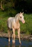 Portrait of nice foal Stock Photo