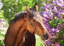 Portrait of nice horse near flowers Stock Photography