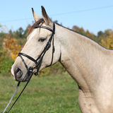 Portrait of nice Kinsky horse with bridle Stock Image