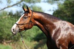 Portrait of nice wet horse Stock Photo