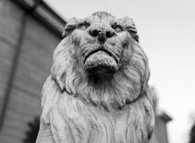 Portrait of a noble and regal male lion stone statue in a stately home garden in England, United Kingdom. Portrait of a noble and regal male lion stone statue in stock photos