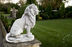 Portrait of a noble and regal male lion stone statue in a stately home garden in England, UK. Portrait of a noble and regal male lion stone statue in a stately royalty free stock photo