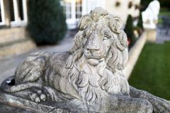 Portrait of a noble and regal male lion stone statue in a stately home garden in England, UK. Portrait of a noble and regal male lion stone statue in a stately stock images