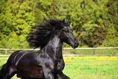 Portrait noir de cheval à l'arrière-plan d'automne image libre de droits