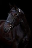 Portrait noir de cheval sur le fond noir Photographie stock libre de droits