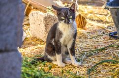 Portrait noir et blanc de chat images libres de droits