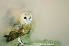 Free Portrait Of A Barn Owl Bird, Watercolor Painting Royalty Free Stock Photos - 125373688