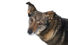 Portrait Of A Cute Dog Royalty Free Stock Images