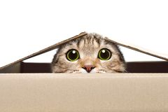 Free Portrait Of A Funny Cat Looking Out Of The Box Royalty Free Stock Photo - 121112695