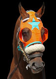 Portrait Of A Race Horse Stock Photography