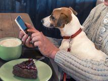 Free Portrait Of A Small Dog Jack Russell Terrier, Sitting On The Lap Of An Adult Male Owner, While He Is Using A Smartphone Royalty Free Stock Photo - 136941905