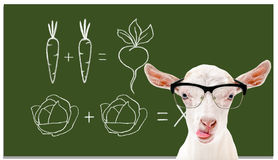 Portrait Of A Smart Goat On The Background Of A School Board Stock Photography