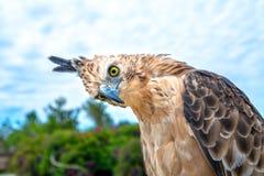 Free Portrait Of Eagle Royalty Free Stock Photo - 186360555