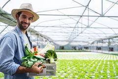 Free Portrait Of Farmer In Greenhouse Hydroponic Holding Basket Of Vegetable. He Is Harvesting Vegetables In Farm. Stock Photo - 167582800