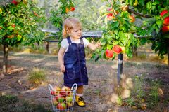 Free Portrait Of Little Toddler Girl With Red Apples In Organic Orchard. Adorable Happy Healthy Baby Child Picking Fresh Ripe Stock Photography - 168536102