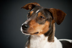 Free Portrait Of Mixed-breed Terrier Stock Photography - 28732692
