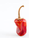 Portrait Of Tall Chili Royalty Free Stock Images