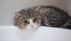 Free Portrait Of The Scared Striped Cat. Royalty Free Stock Images - 107775829