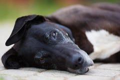 Portrait of old dog Stock Photo