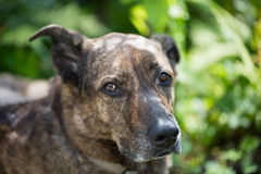 Portrait from a old dog, green background royalty free stock photo