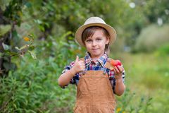 Portrait of one cute boy in a hat in the garden with a red apple, emotions, happiness, food. Autumn harvest of apples stock photography