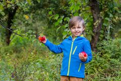 Portrait of one cute boy in a hat in the garden with a red apple, emotions, happiness, food. Autumn harvest of apples stock photos