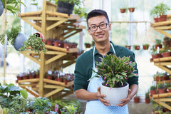 Portrait of One Happy Young Male Florist in Shop. One Young Happy Asian Male Florist Working in Shop Stock Photo