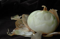 Portrait of an onion Stock Images