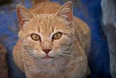 Portrait of a orange cat outdoor. Portrait of an orange cat outdoor with a beautiful background Stock Photo