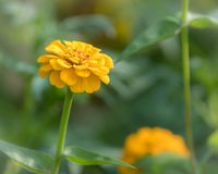 Portrait of an orange flower blossom in a flower bed Royalty Free Stock Images