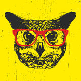 Portrait of Owl with glasses. Royalty Free Stock Image