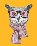 Portrait of Owl with glasses and scarf. Royalty Free Stock Images