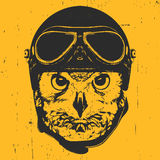 Portrait of Owl with Vintage Helmet. Stock Photography