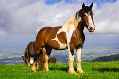 Portrait of paint mare horse at Subasio mountain Stock Photos