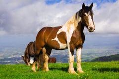 Portrait of paint mare horse at Subasio mountain Stock Photos