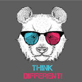 Portrait of the panda in the colored glasses. Think different. Vector illustration. Stock Photography