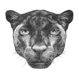 Portrait of Panther. Hand drawn illustration Royalty Free Stock Image