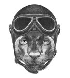 Portrait of Panther with Vintage Helmet. Stock Photos