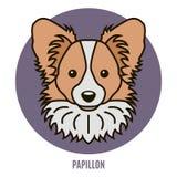 Portrait of Papillon Stock Photos