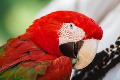 Portrait of parrot Stock Photos