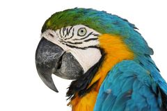Portrait parrot Royalty Free Stock Photos