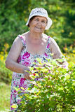 Portrait of pension age woman when gardening. Portrait of pension age Caucasian woman when gardening Stock Images