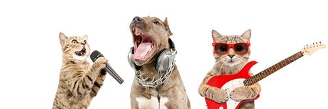 Portrait of pets musicians together. Isolated on white background royalty free stock images