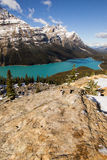 Portrait of Peyto Royalty Free Stock Photography