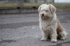 Portrait photo of the homeless dog Ronny. stock image
